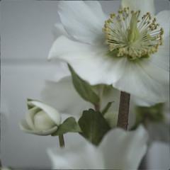 2019, flowers