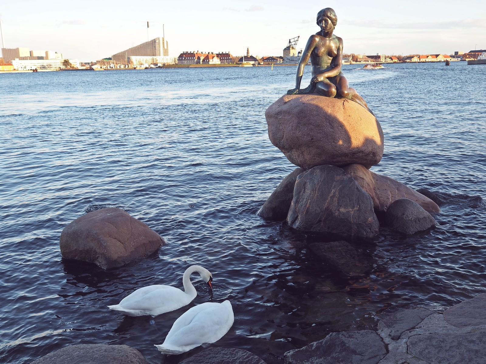 pieni merenneito kööpenhamina tanska