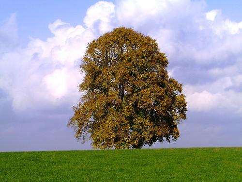 Baum bei Oberschönenfeld_Herbst