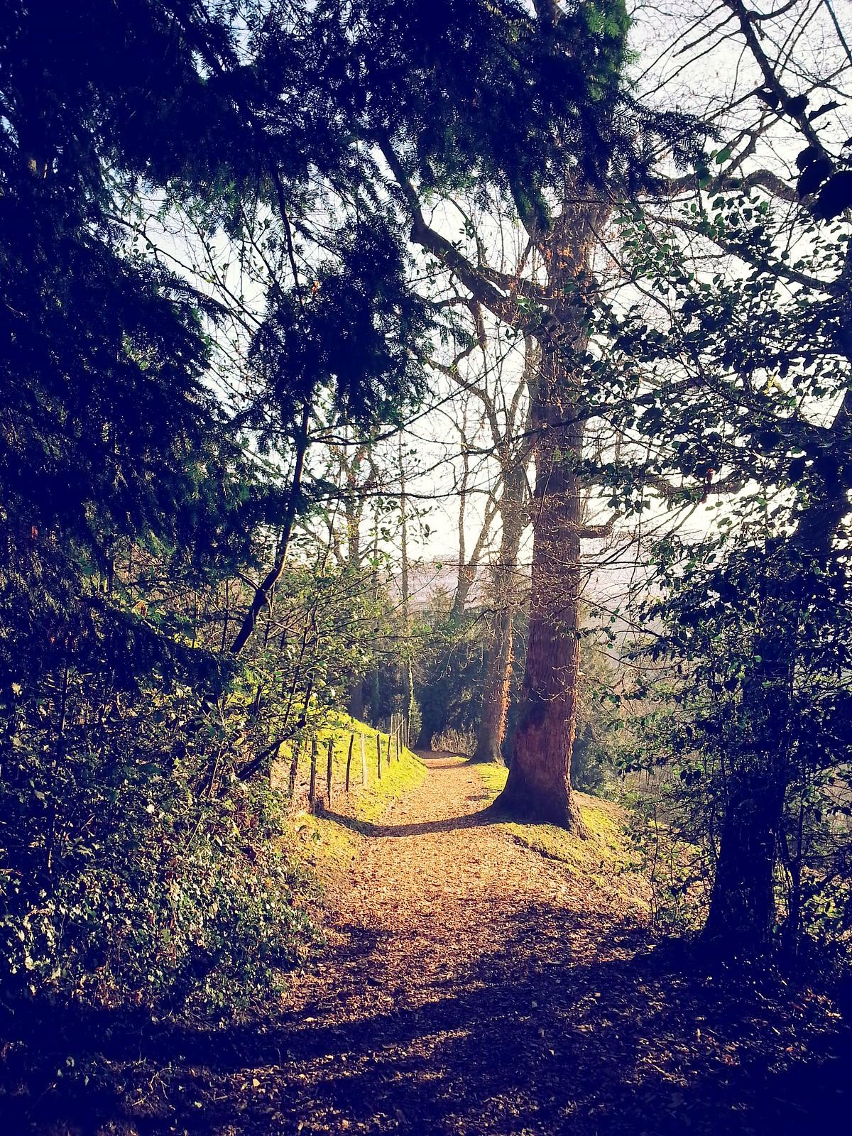 16-01-29 (Lausanne) Parc de l'Hermitage.