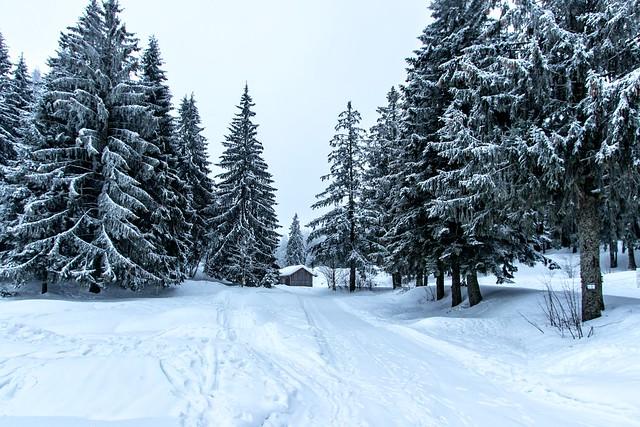 Promenade hivernale [France]