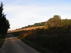 20080917 38515 1018 Jakobus Weg Hügel Sonnenblumenfeld - Photo of Sainte-Alauzie