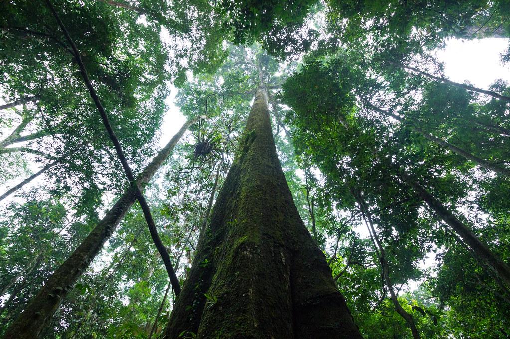 Rain forests of Sumatra