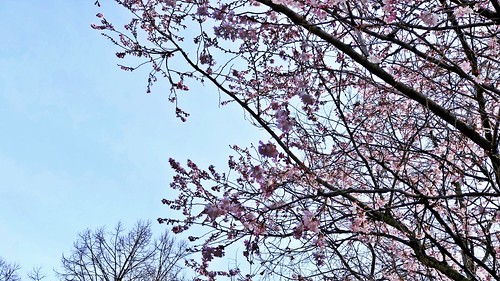 Crazy, the spring is already kissing us in Berlin | by ANBerlin