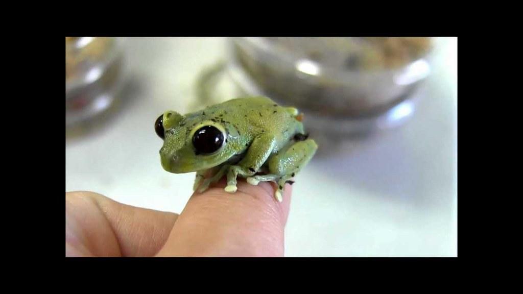 Frog - Example of Alien Eyes ? https://i.ytimg.com/vi/ACkuSWWYNJc/maxresdefault.jpg