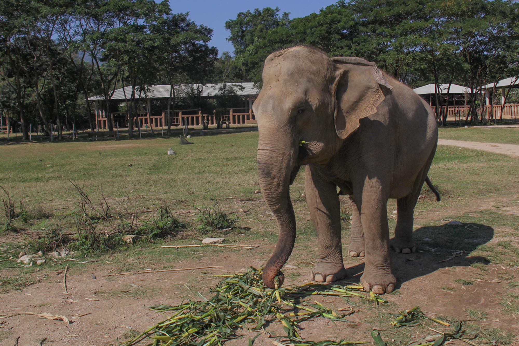 Elephant_Nature_Park1