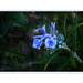 La délicate fleur de rosmarinus officinalis, Romarin,  l' arbrisseau des garrigues ,  symbole de gaieté……… by ** Capo Jean-claude * <°)))) ><