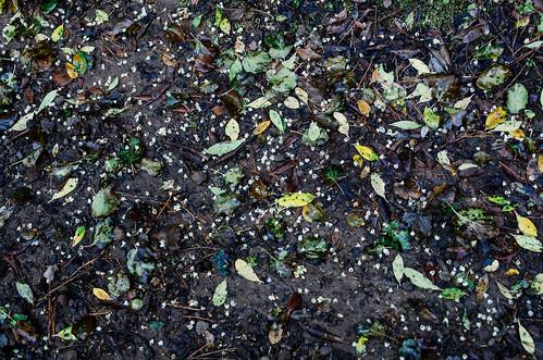 Salina - île éolienne - L'automne dans le cratère