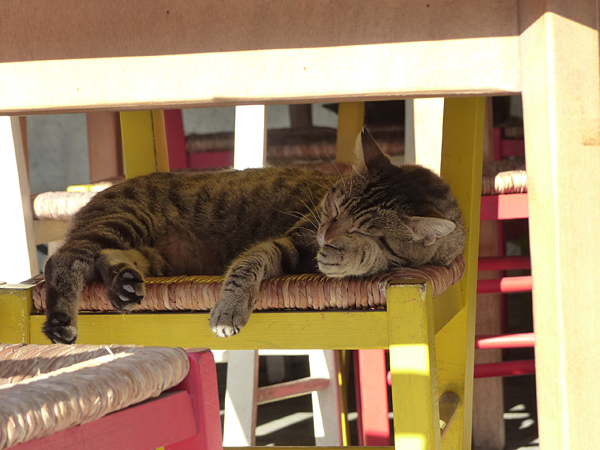 chat fatigué