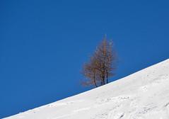 Solda in inverno