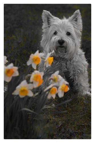 Siéntate en silencio sin hacer nada, la primavera llega y la hierba crece por sí sola.