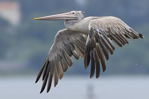 Wildlife at Kovalam Beach, India
