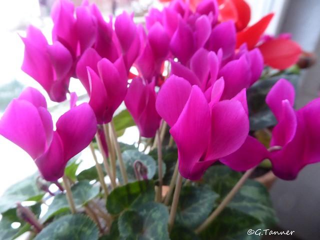 Blumen im Haus