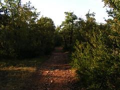 20080915 37378 1016 Jakobus Stein Weg Wald - Photo of Lentillac-du-Causse