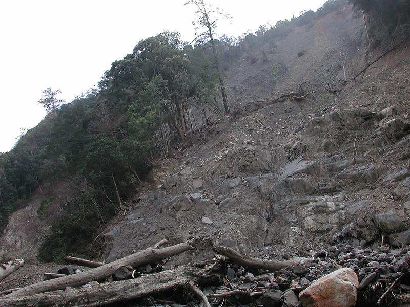 圖5、河川上游林地的自然崩塌,常導致林木傾倒滑落,漂送到下游成為漂流木