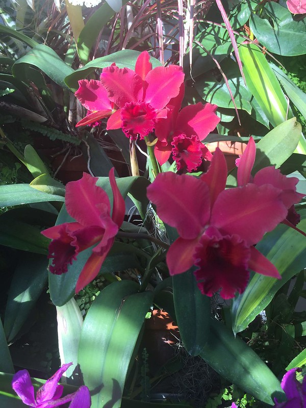 Orchid House at Hillwood Estates