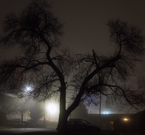 Tree at night in fog