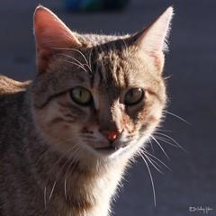 #PAR #Cat