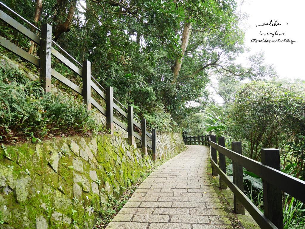 台北貓空一日遊踏青親子登山景點推薦樟樹步道 (7)
