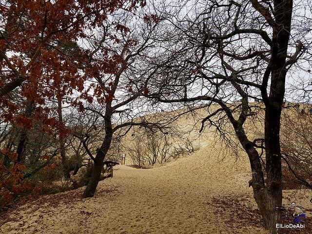 Duna de Pilat, la duna más grande de Europa 5