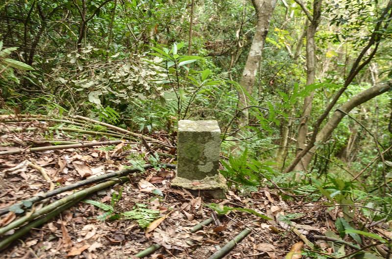 法範山南峰冠字補沖(01)的山字森林三角點(Elev. 570 m) 1