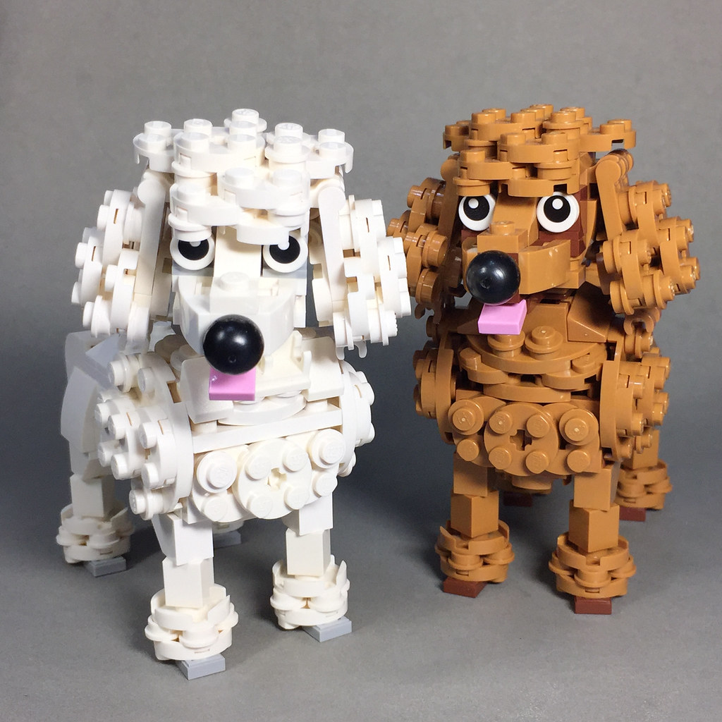 Standard-size Poodle