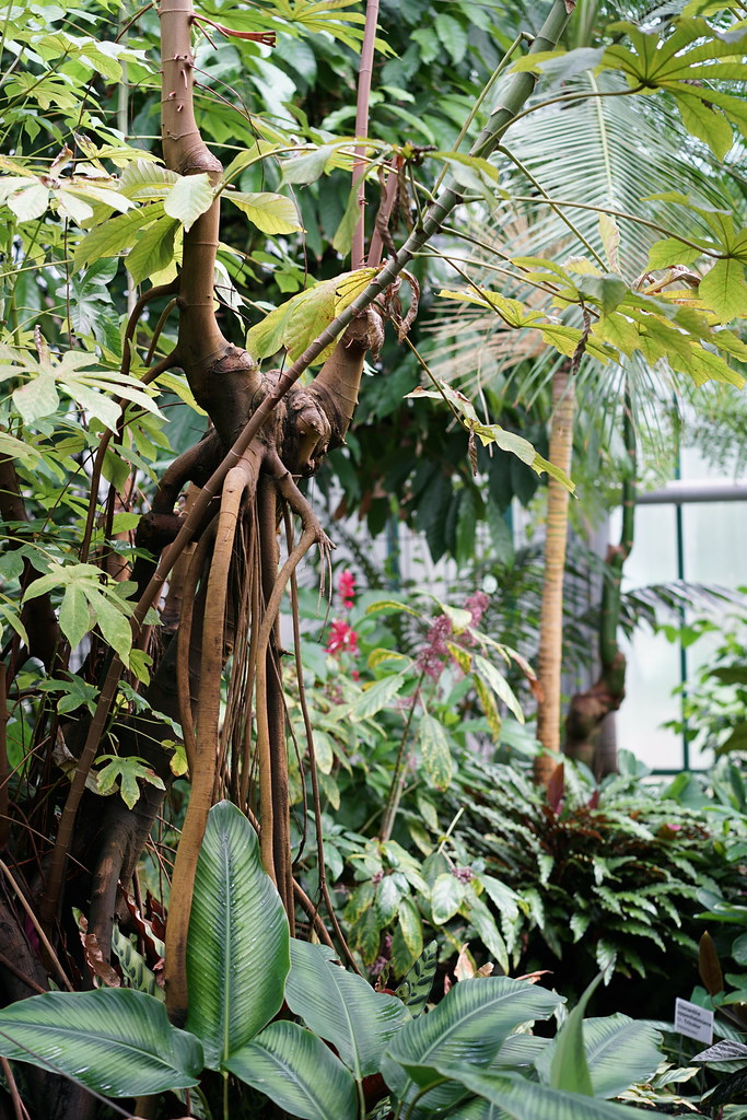 Liberec Botanical Garden_7