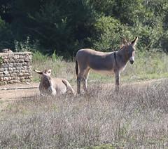 patient-donkeys---les-ferigouilleres_43047957880_o - Photo of Uzès