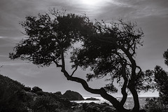 Tree - Photo of Six-Fours-les-Plages