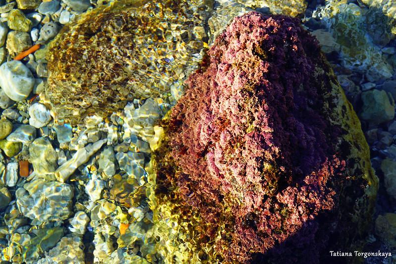 Камень с водорослями