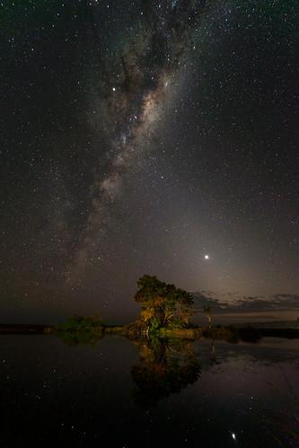 The Astro Tree