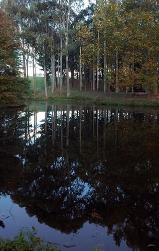 Taitua Arboretum Lake reflections