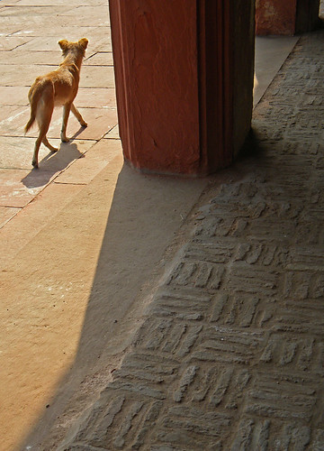 Dog at the Agra Fort, a 16th-century Mughal fortress, is another UNESCO World Heritage site in Agra, and in its own way just as beautiful as the Taj Mahal
