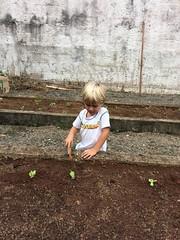 Alunos plantam mudinhas na Horta da Academia