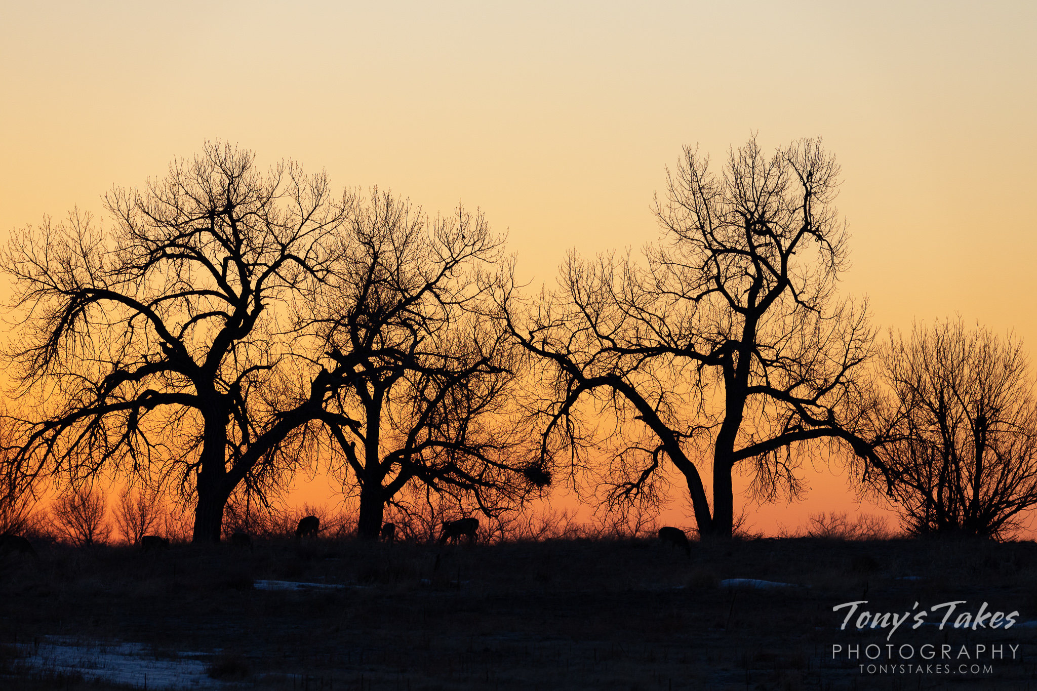 The orange glow of sunrise silhouettes trees and deer. (© Tony's Takes)