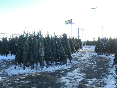 IKEA Halifax Christmas Tree Lot