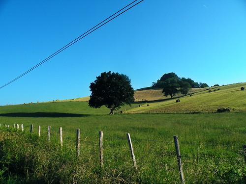 20090603 022 1113 Jakobus Hügel Feld Wald Baum Zaun