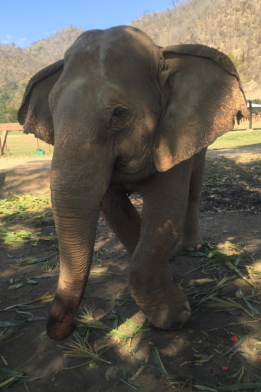 Elephant_Nature_Park10