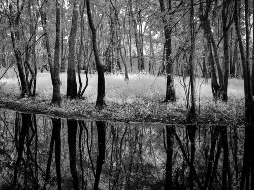 grass olympus landscape nature reflection ©edrosack panorama florida shore tree river water sanford island infrared centralflorida usa blackbearwildernessarea swamp monochrome blackandwhite grayscale ir us
