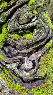 Part of a tree stump, hosting moss