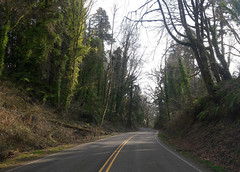 Highway along the temperate Pacific coast, early spring, Big Leaf Maple, hemlock, ferns, leaves, fallen tree, ivy overgrowth, yellow stripes, sunny, overcast, Washington, USA