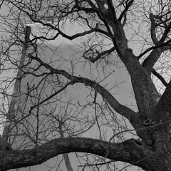 Dos au mur l'arbre amer