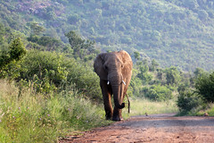 Pilanesberg National Park, North West, South Africa