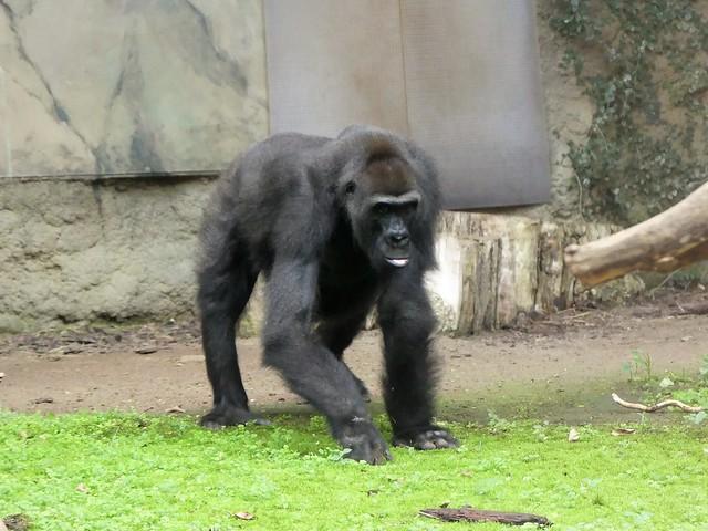 Zoo Rostock - 09.11.18