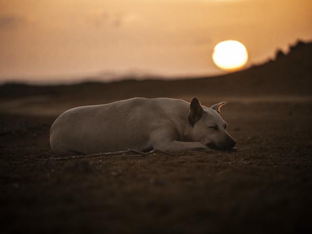 Dog sunset, Panasonic DMC-G6, Lumix G Vario 45-200mm F4.0-5.6 Mega OIS