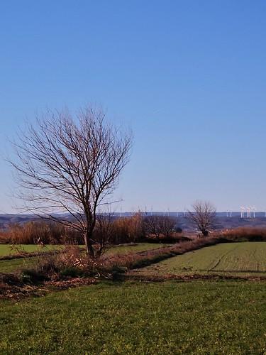 Árbol y campos de alfalfa #grass #arbol #árbol #tree #campo #paisaje #landscape #bluesky #winter