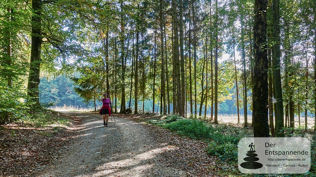 Im Wald zwischen Ludwigshafen und Stockach