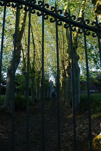 20090529 115 1108 Jakobus Bäume Allee Schloss Gitter