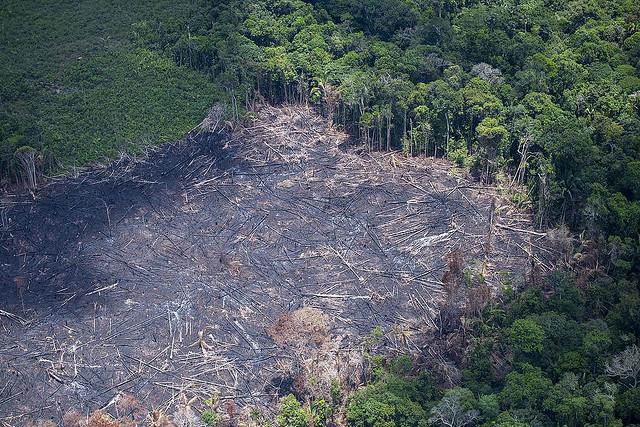Entre 2017 e 2018, desmatamento da Amazônia Legal cresceu 13,7% - Créditos: Divulgação/Greenpeace