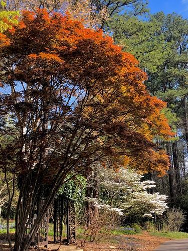 """Nothing gold can stay"" - Robert Frost. Aldridge Gardens, Birmingham (Hoover), Alabama"